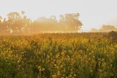 Cena da manhã do inverno - Índia rural Foto de Stock