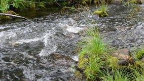 Cena da natureza da água fresca do córrego video estoque
