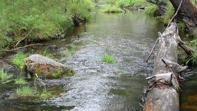 Cena da natureza da água fresca do córrego Cena da natureza do córrego da água fresca da montanha vídeos de arquivo