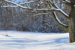Cena da neve do inverno fotos de stock royalty free
