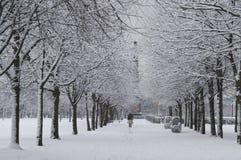Cena da neve do parque Fotografia de Stock Royalty Free