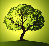 Cena da noite Árvore verde do vetor folhas do verde amarelo Fotos de Stock