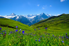 Cena da paisagem de primeiramente a Grindelwald, Bernese Oberland, Swi fotos de stock