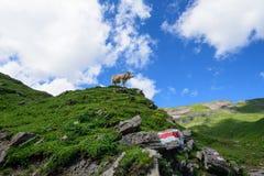 Cena da paisagem de primeiramente a Grindelwald, Bernese Oberland, Swi Fotos de Stock Royalty Free
