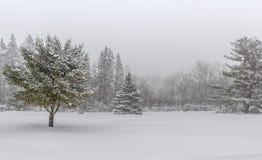 Cena da paisagem do inverno com nevadas fortes Foto de Stock