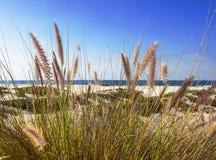 Cena da praia com grama selvagem Fotos de Stock