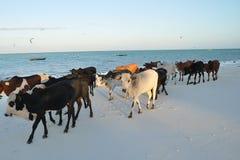 Cena da praia em Zanzibar foto de stock