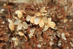 Cena da queda com as plantas que foram semear, prontas para fazer sua maneira com os meses de inverno Fotografia de Stock Royalty Free