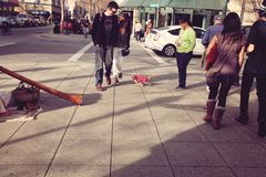 Cena da rua com a chihuahua pequena que freaking para fora do músico da rua Foto de Stock