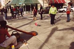 Cena da rua com a chihuahua pequena que freaking para fora do músico da rua Imagem de Stock Royalty Free