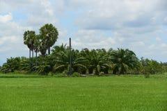 Cena de árvores verdes do campo e de coco do arroz na área rural foto de stock royalty free