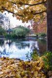 Cena de acalmação do outono Fotos de Stock Royalty Free