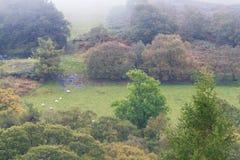Cena de Autumn Fall, grama da névoa e árvores, Gales, Reino Unido Fotografia de Stock