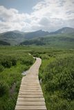 Cena de Backcountry da montanha do verão de Colorado imagens de stock