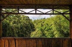 Cena de bambu da floresta Fotos de Stock Royalty Free