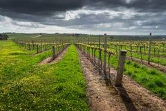 Cena de Barossa Valley Foto de Stock