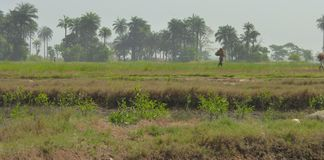 Cena de Guiné-Bissau Foto de Stock Royalty Free