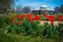 Cena de Monticello com foco em tulipas vermelhas Imagens de Stock Royalty Free