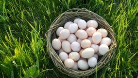 Cena de Pcturesque de grandes ovos caseiros da galinha com um ninho de vime feito ? m?o na grama verde nos raios do sol video estoque