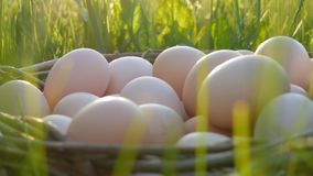Cena de Pcturesque de grandes ovos caseiros da galinha com um ninho de vime feito ? m?o na grama verde nos raios do sol filme