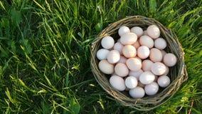 Cena de Pcturesque de grandes ovos caseiros da galinha com um ninho de vime feito ? m?o na grama verde nos raios do sol vídeos de arquivo