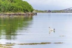 Cena de Serene Scandinavian Fjord Village com ganso Fotos de Stock