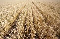 A cena de uma boa colheita Foto de Stock Royalty Free
