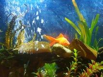 cena di caccia del pesce rosso Immagine Stock
