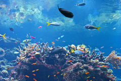 Cena do aquário Fotos de Stock
