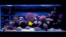 Cena do aquário do aquário do recife de corais foto de stock royalty free