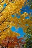 a cena do céu azul, amarelo, vermelho, mudança verde sae no outono fotografia de stock