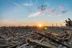 Cena do campo dos campos e dos pilões da eletricidade contra o céu dourado do por do sol fotos de stock