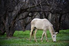 Cena do conto de fadas do cavalo selvagem de Salt River Fotos de Stock