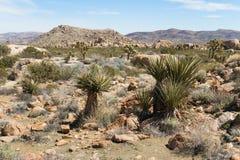 Cena do deserto Imagens de Stock Royalty Free