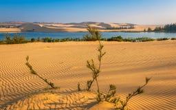 Cena do deserto com dunas de areia, lago, árvores e testes padrões da areia imagem de stock
