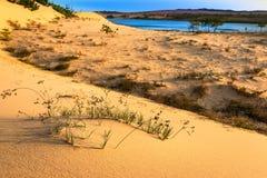 Cena do deserto com dunas de areia, lago, plantas e testes padrões da areia foto de stock royalty free