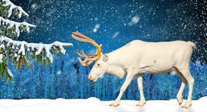 Cena do feriado de inverno na floresta e em cervos nevando Fotos de Stock Royalty Free