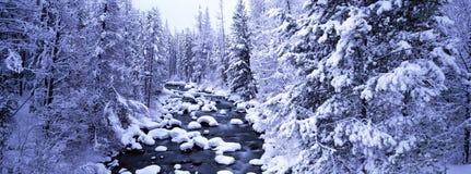 Cena do inverno foto de stock royalty free