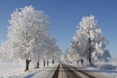 Cena do inverno com árvores fotografia de stock