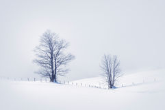 Cena do inverno com árvores sós Imagem de Stock