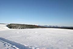 Cena do inverno com floresta Imagens de Stock