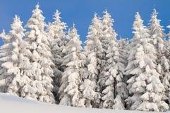 Cena do inverno com gelo e neve Fotos de Stock Royalty Free