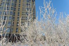 Cena do inverno da cidade, árvores cobertas com a neve e prédio de apartamentos alto residencial da elevação no fundo imagem de stock