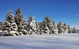 Cena do inverno do país Imagem de Stock Royalty Free
