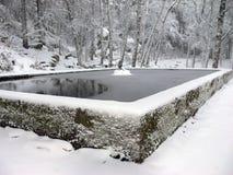 Cena do inverno na floresta Fotos de Stock Royalty Free