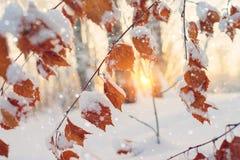 Cena do inverno na floresta fotografia de stock royalty free