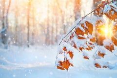 Cena do inverno na floresta foto de stock
