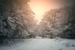 Cena do inverno no nascer do sol com luz morna Imagem de Stock