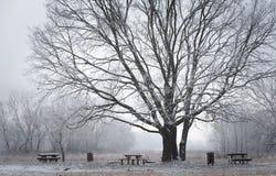 Cena do inverno no parque Fotografia de Stock Royalty Free