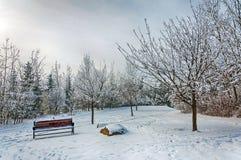 Cena do inverno no parque Fotos de Stock Royalty Free